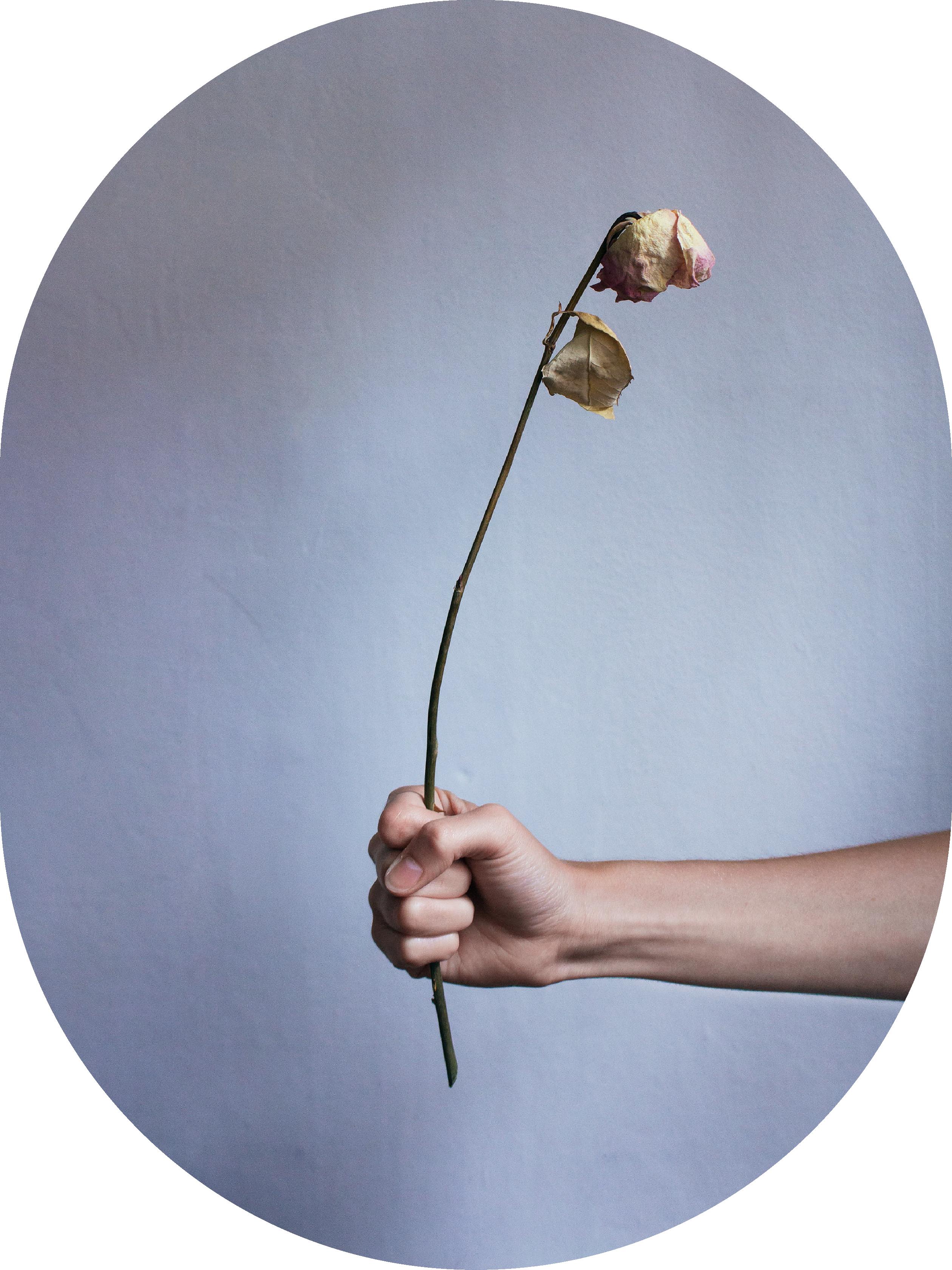 Utan titel (blomma nr 60)